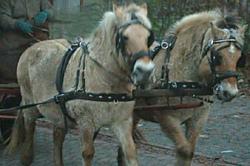 Pferdekutsche, Ort der Verführung